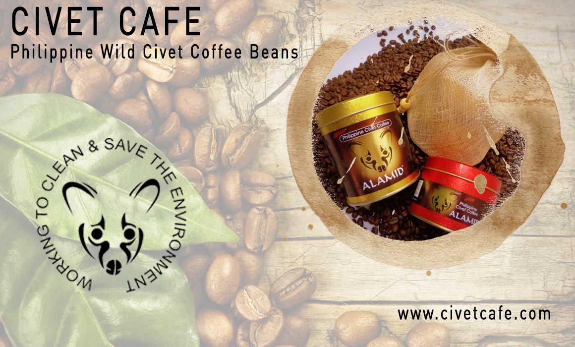 Civet Cat Coffee Making Process in Philippines Café