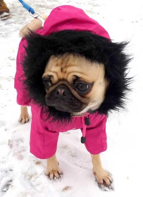 Schneeanzug für Hunde, Hunde Schneeanzug, Winteranzug für Hunde, Winteranzug für Hunde