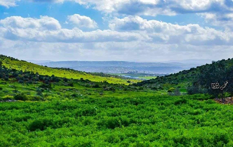 جمال الطبيعة من سهول فلسطين الخضراء عدسة محمود معطان Natural Landmarks Nature Landmarks