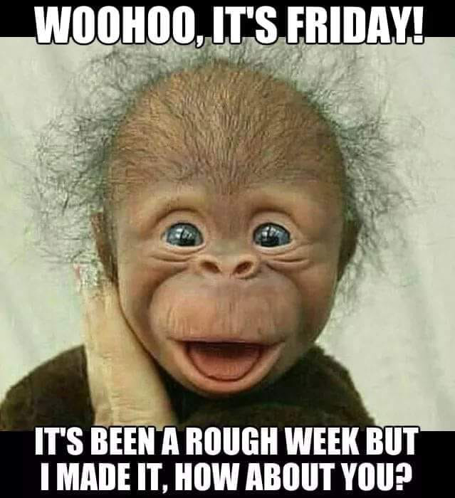 Who S With Me Tgif Funny Good Morning Memes Morning Quotes Funny Good Morning Funny Pictures