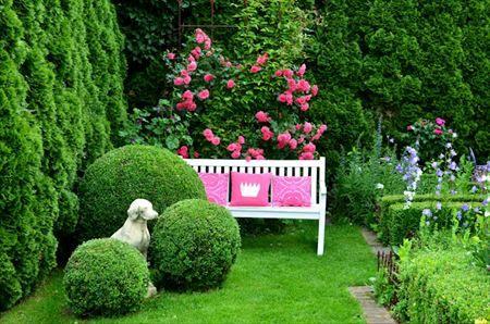 boxwood balls, bench, rose
