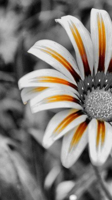 Hd Mobile Wallpapers Hd Flower Wallpaper Love Wallpaper Backgrounds Flower Background Wallpaper Background love wallpaper hd for mobile