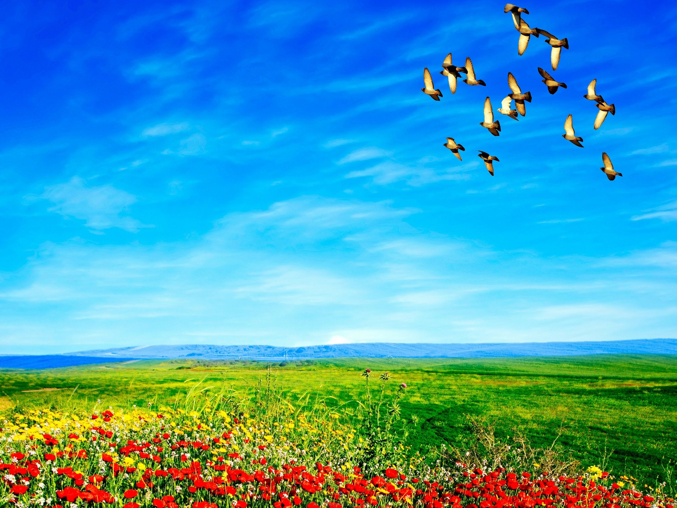 Beautiful Birds Flying on The Sky HD Wallpaper Download ...