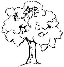 Resultado de imagen para marcos de flores dibujos para colorear