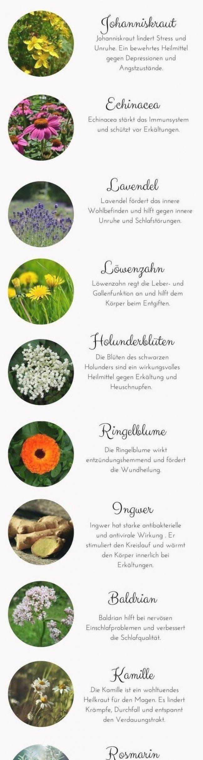 Tinkturen k  nnen ganz einfach selbst hergestellt werden  Es gibt unz  hlige wunderbare Heilpflanzen...