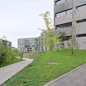 Housing Project Triemli Landscape Architecture Landscape