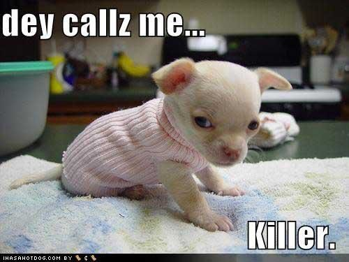 killer cuteness