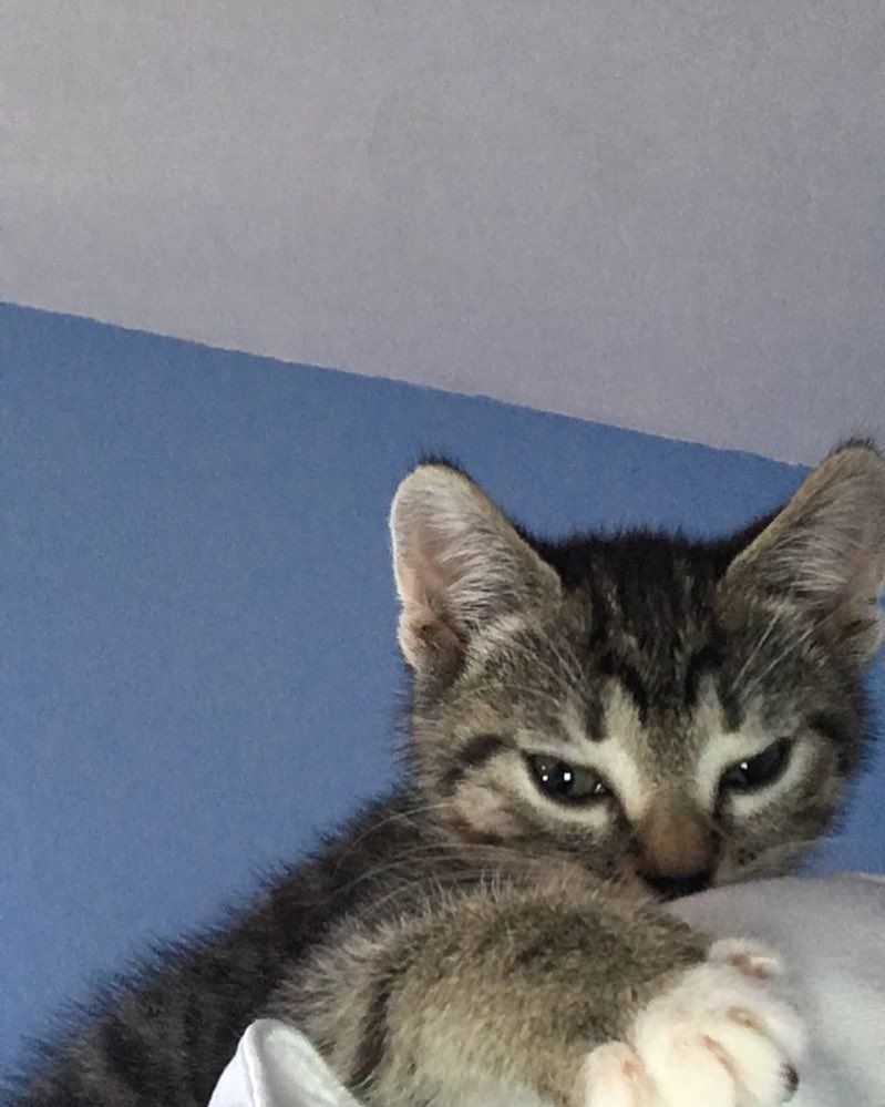 Watch The Best Youtube Videos Online My Favorite Place To Sleep Is Moms Shoulder Kittensofinstagram Catsofinstagram Cats Kittens Cutest Cute Cats Cat Nap