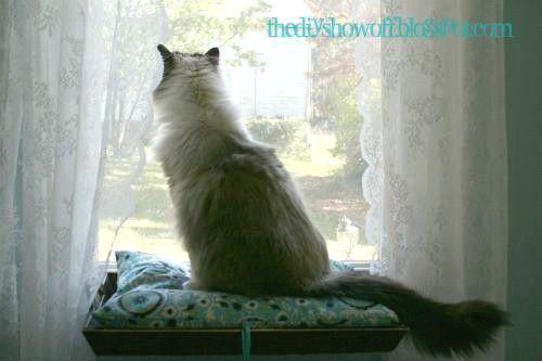 Come fare un posto vicino al finestrino per il tuo gattino Come fare un posto vicino al finestrino per il tuo gattino