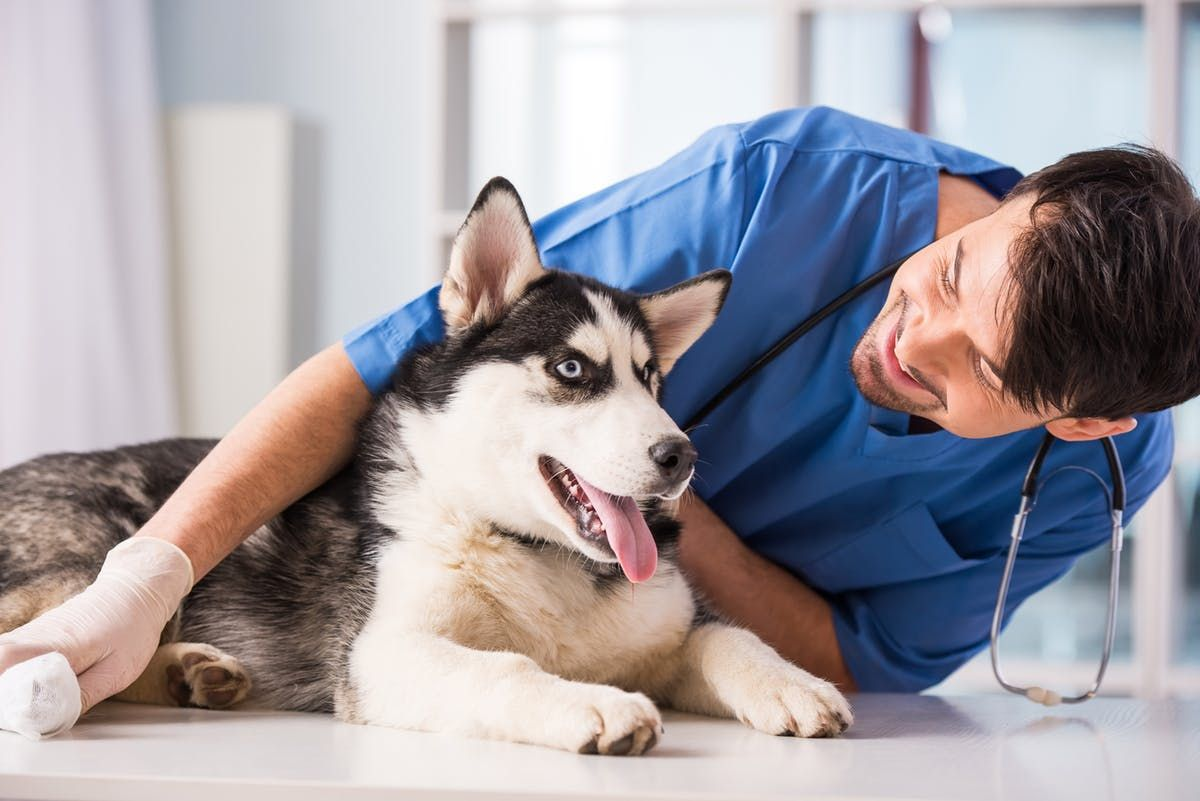 9 Ways to Get Cheap or Free Veterinary Care for Your Pet