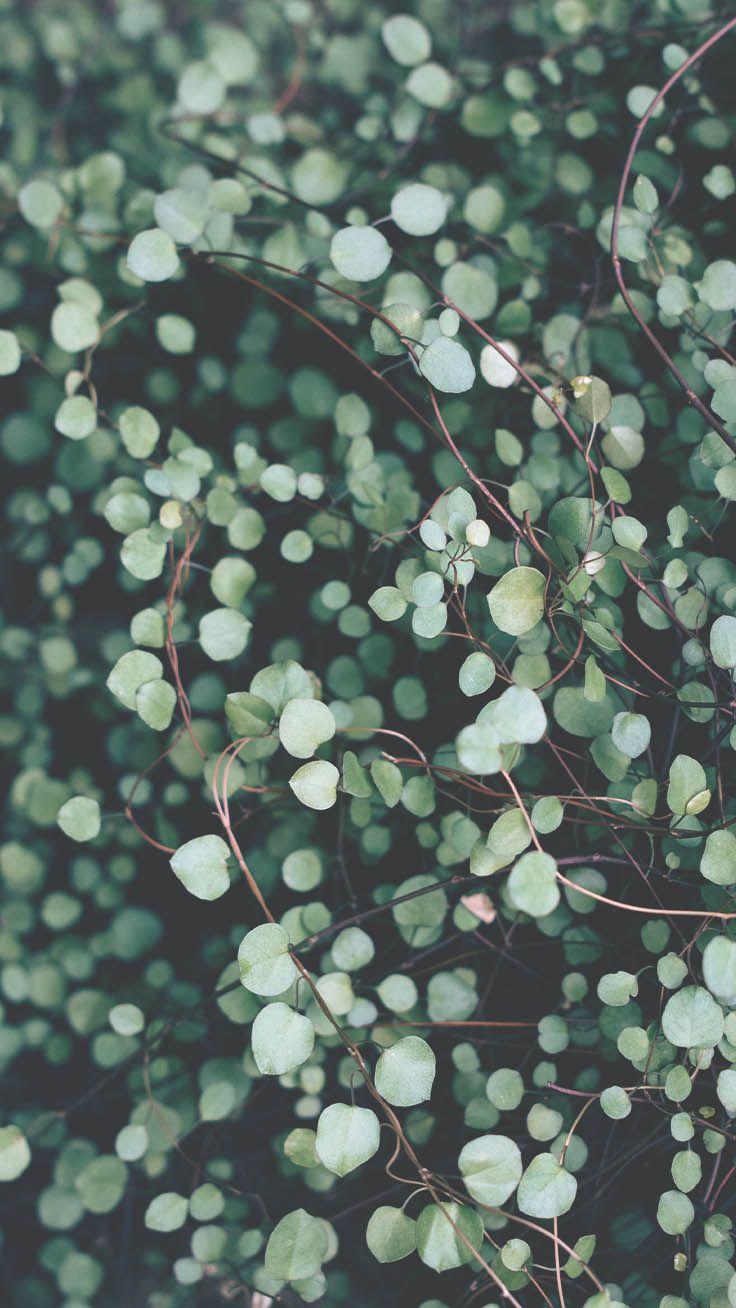 Stunning iPhone wallpaper Botanical iPhone Wallpapers
