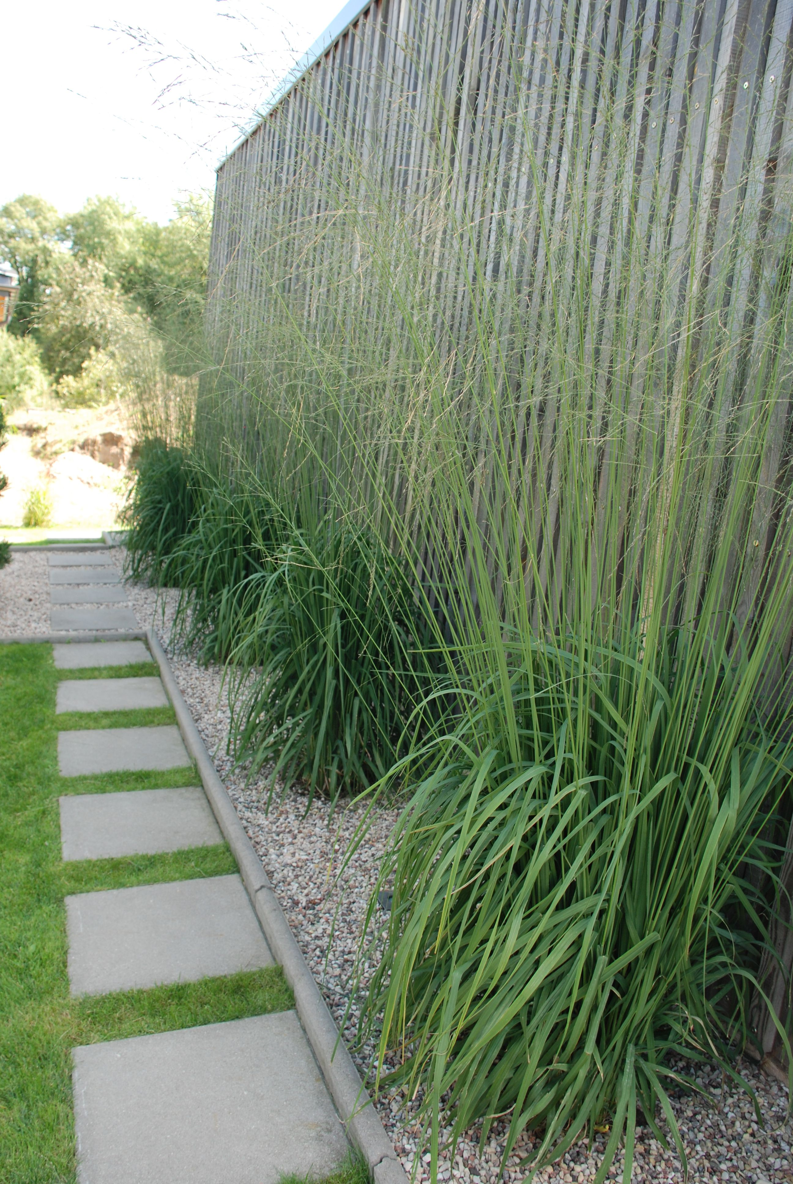 New Zealand plants for UK gardens - in pictures | Grasses, Plants ...