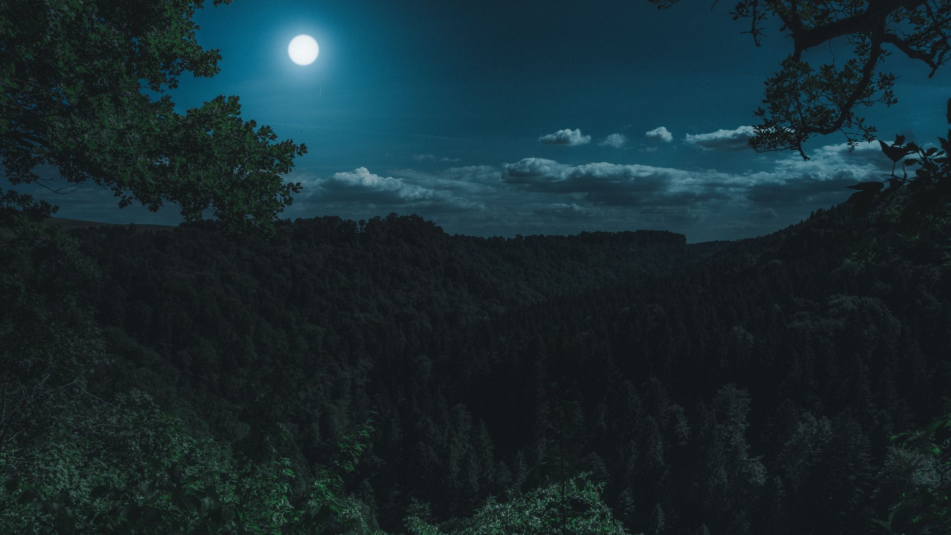 Green Forest Trees Night Moon Nature 1920x1080 Wallpaper Night Landscape Landscape Photography Tutorial Landscape
