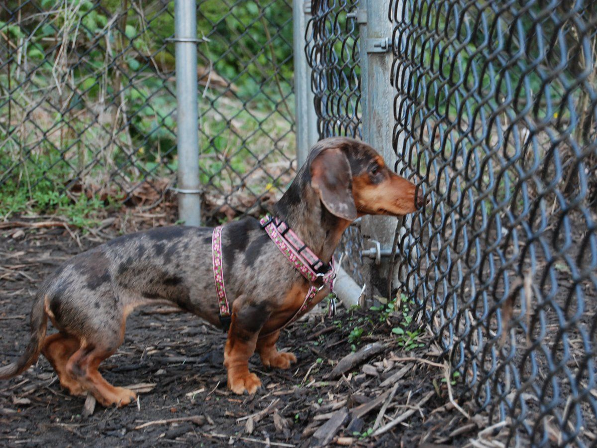 5 Seattle Area Dog Parks to Delight Your Small Dog Dog