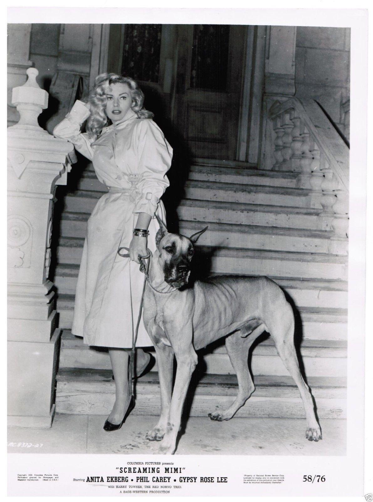 Anita Ekberg Glamour Dogs Great Dane Dogs Great Dane