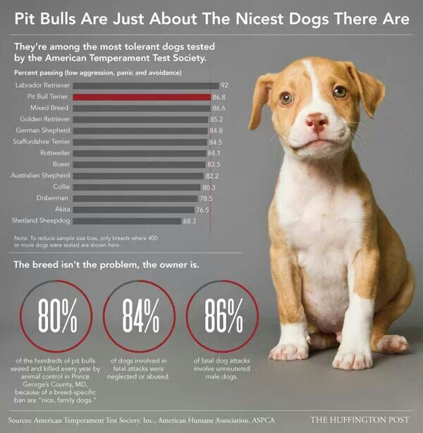 Pit bulls are great family pets, don't be afraid of them!