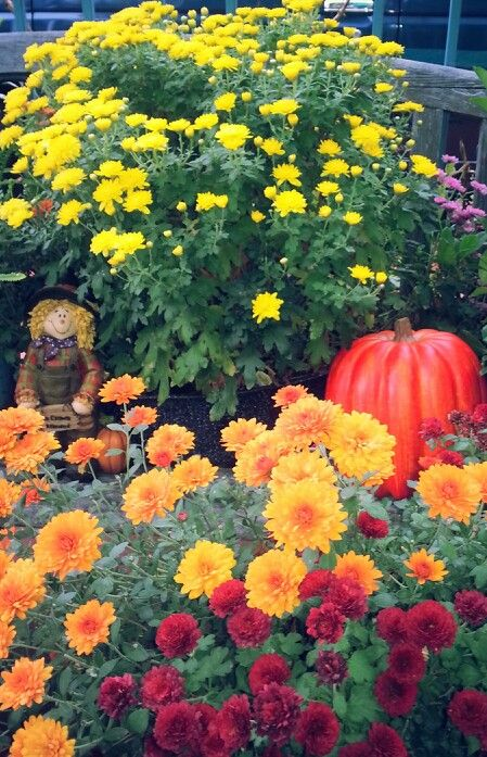 Autumn colors in my patio! Welcome Autumn,  goodbye summer!