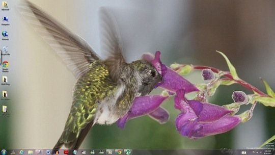 Windows Themes Free Windows Themes Pet Birds Theme
