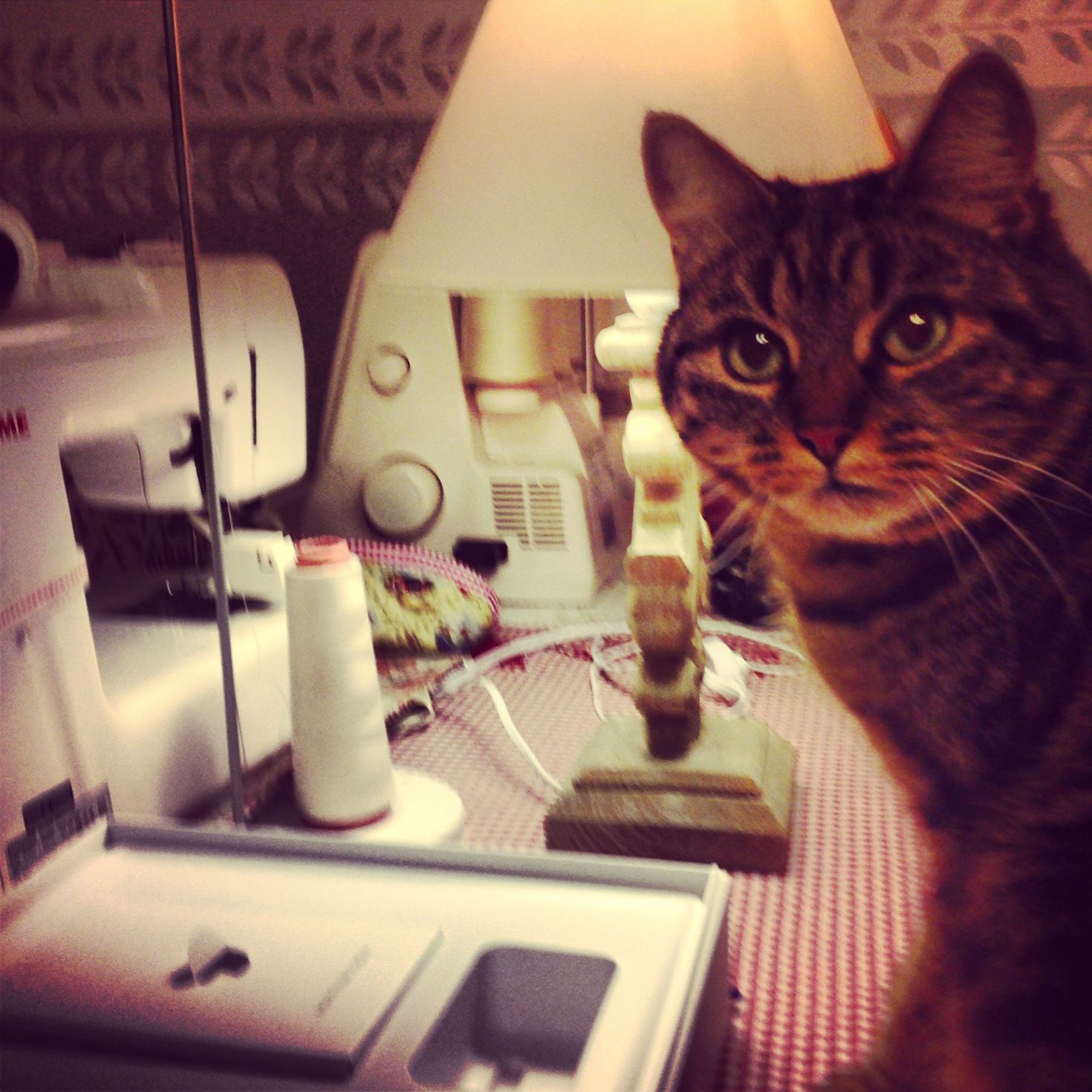 Cats and sewing machine...nice match