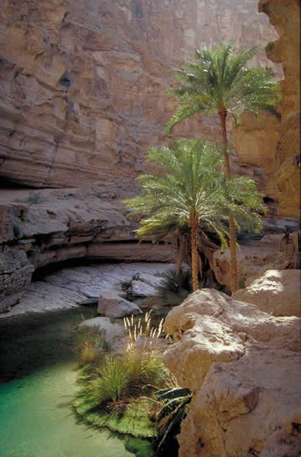 oasis in the rocks