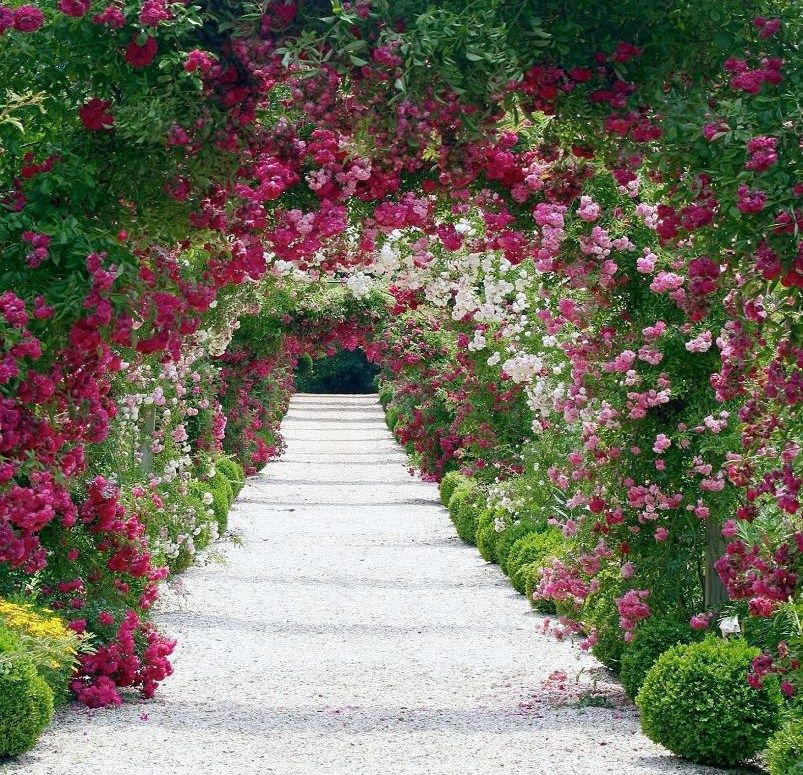Gorgeous Overhang Of Flowers Rose Garden Design Beautiful
