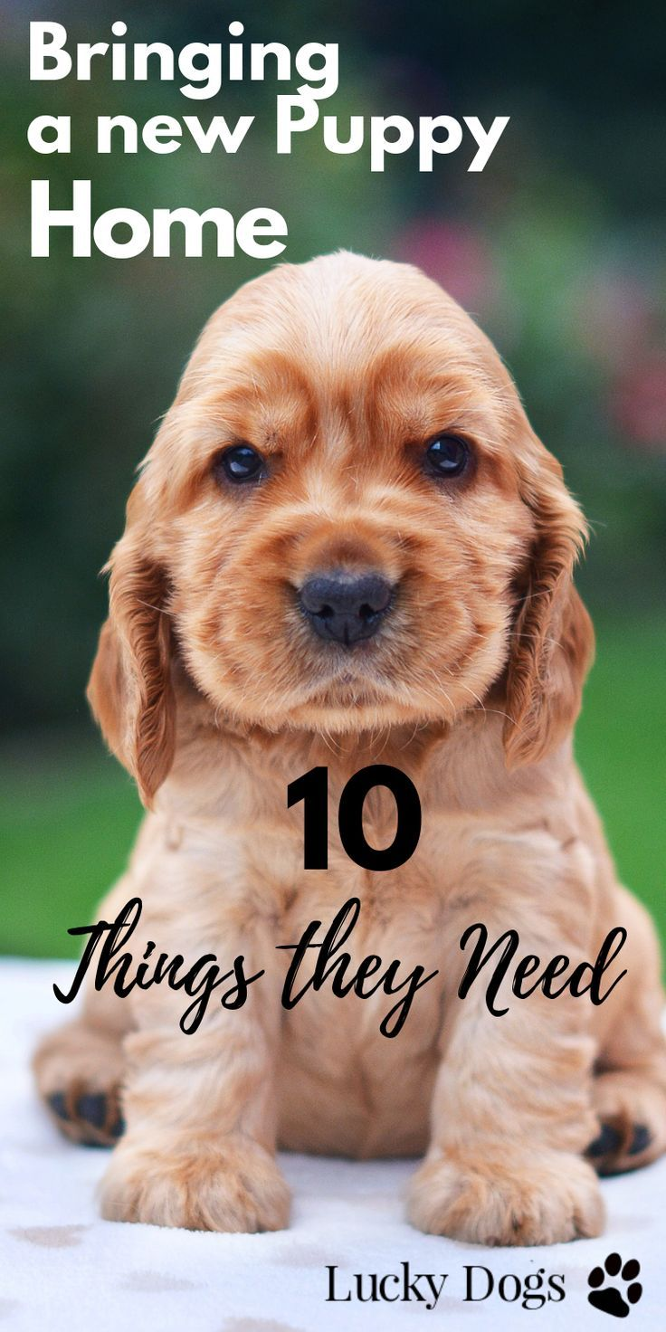 10 Absolute Must Haves for New Dog Owners New puppy