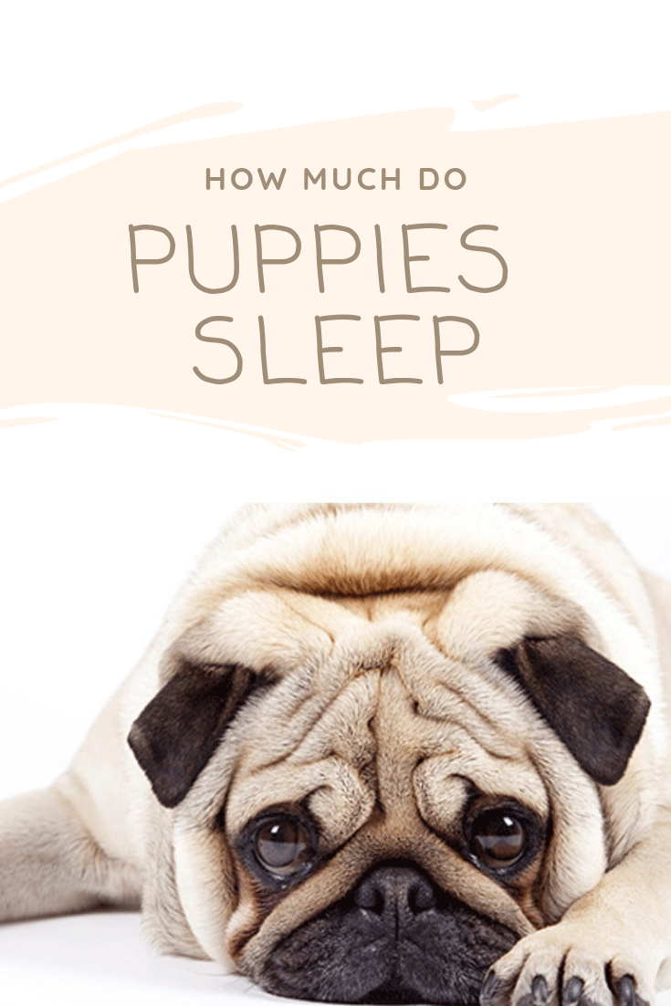 How Much Do Puppies Sleep What Is Normal With Images Sleeping Puppies Sleeping Dogs