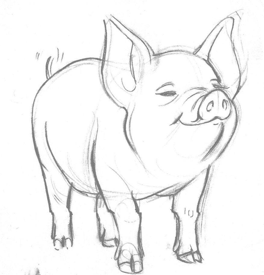Realistic pig drawing