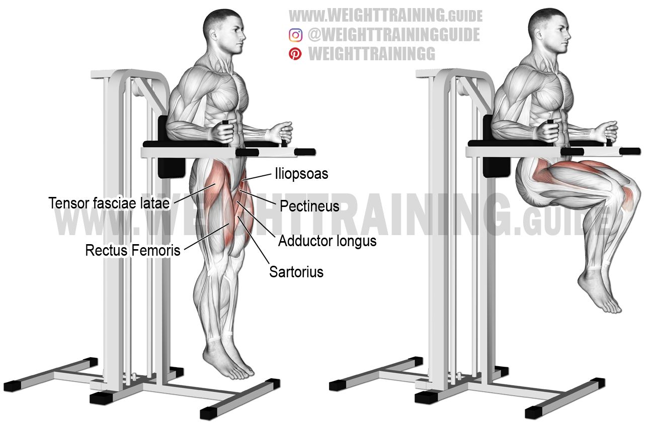 Captains chair leg raise muscles worked - Captain S Chair Leg Raise Aka Vertical Bench Leg Raise An Isolation Exercise