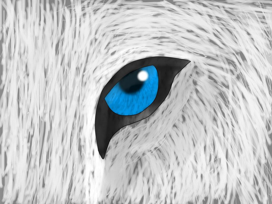 wolf eye by lbdlbdlbd9.deviantart.com on @deviantART