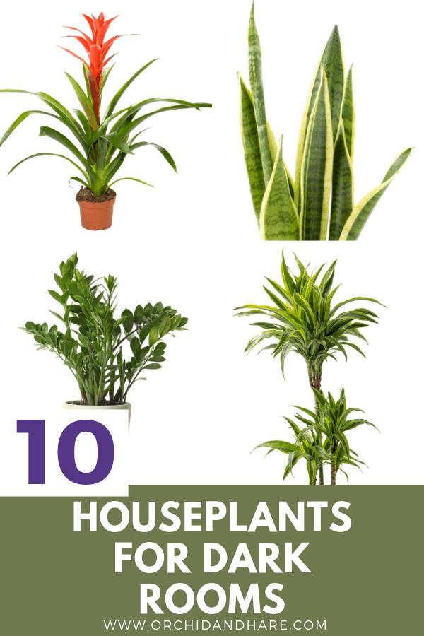 10 Low Light House Plants Indoor Plants That Grow Without Sunlight In 2020 Low Light Plants Low Light House Plants Best Indoor Plants