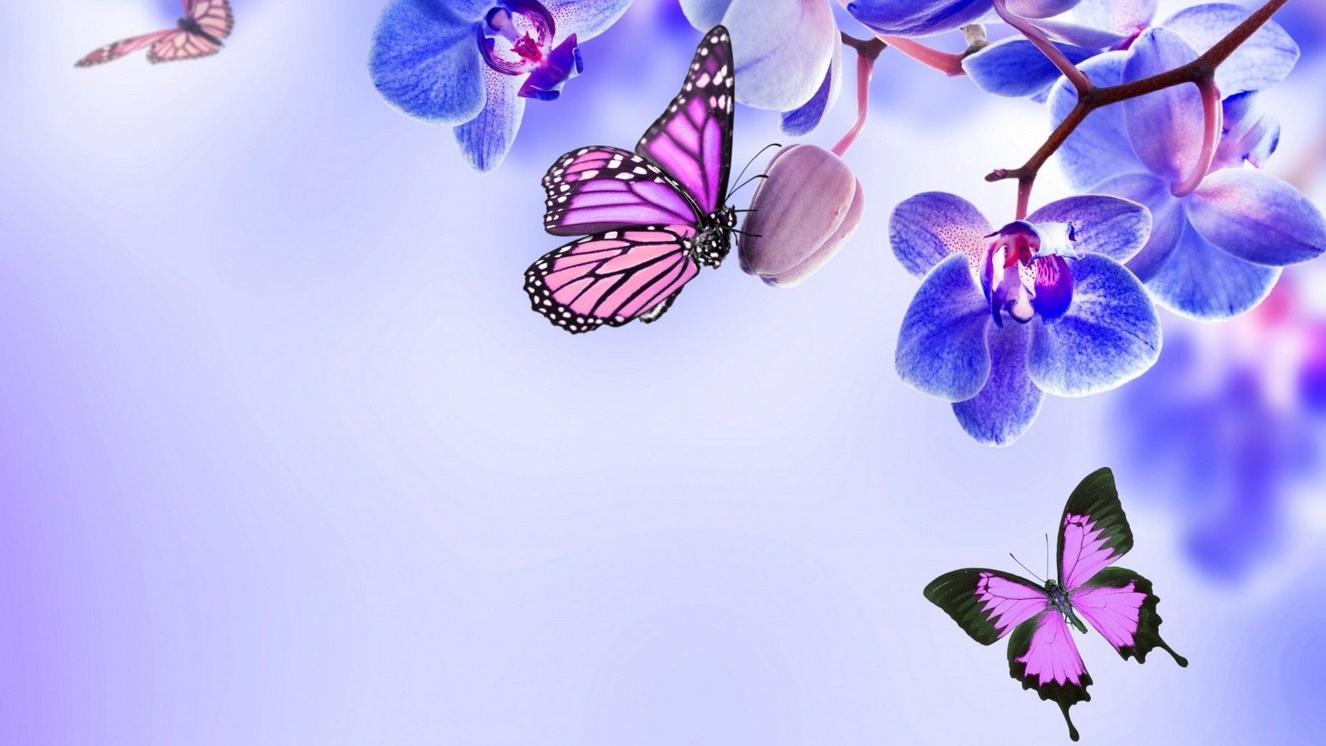 Purple Butterfly Desktop Wallpaper