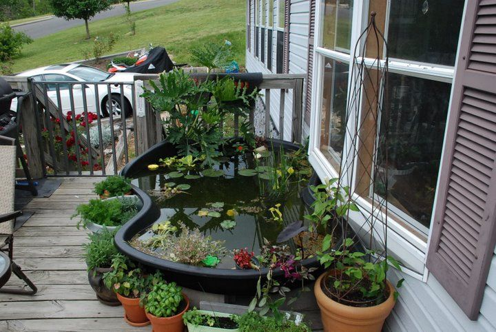 Above Ground Pond With The Pond Plastic Molds Good Tank Mates For Dojos Jenny