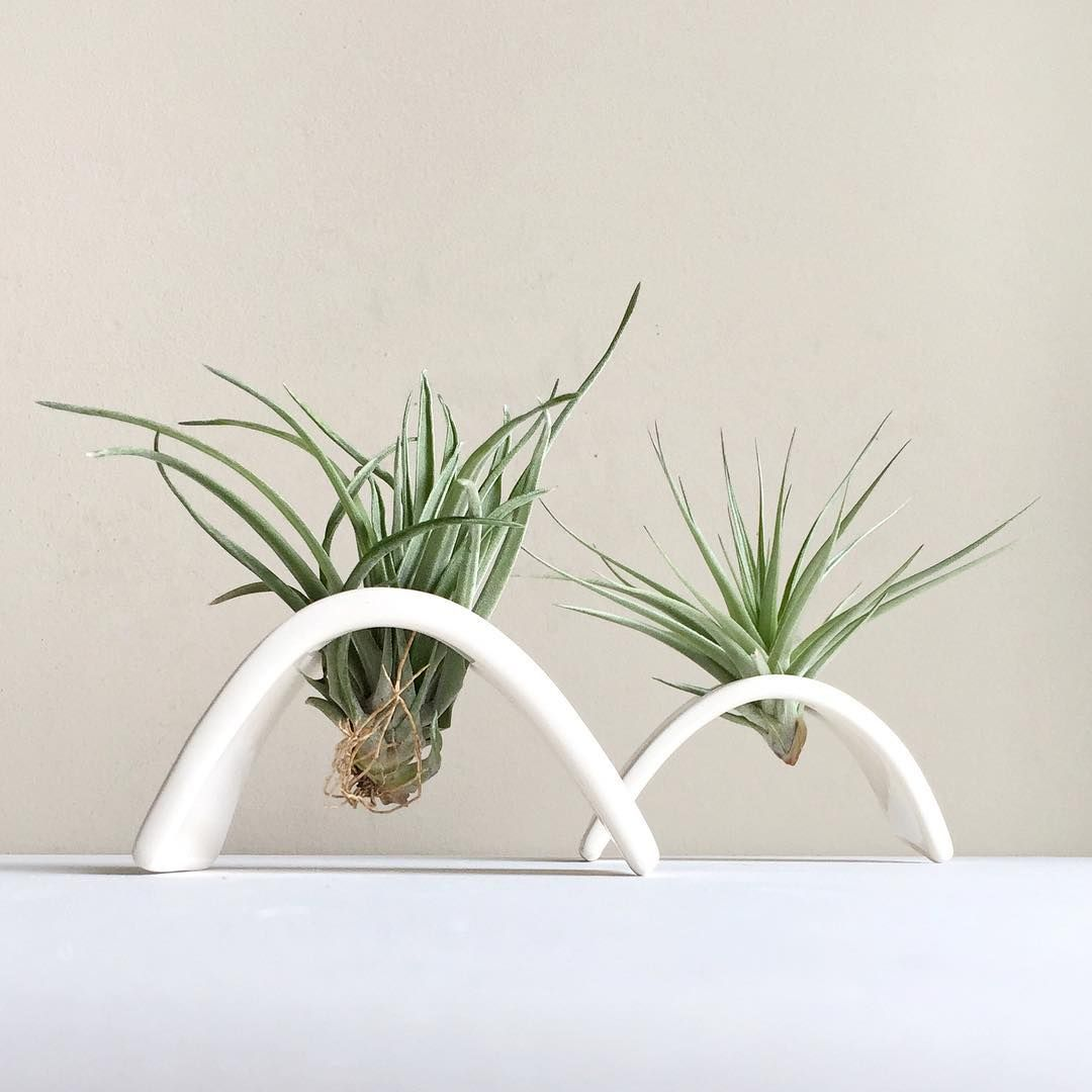 Air Plant Holder Desk Planter Terrarium Gift Airplant Tillandsia Ceramic Décor