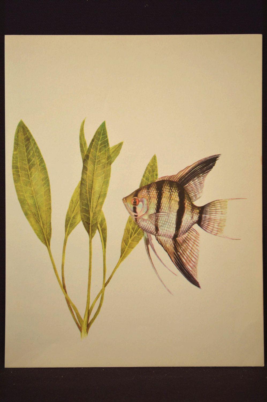 Tropical Fish Wall Decor ~ Instadecor.us