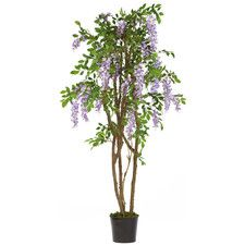 Home With Images Potted Trees Wisteria Tree Silk Tree