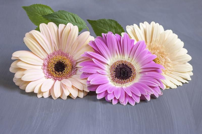 26 Different Types Of Gerbera Flowers And Interesting Facts Most Popular Flowers Gerbera Red Flowers