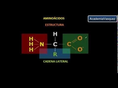Aminoácidos - YouTube
