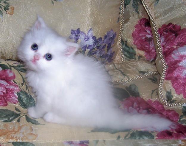 Too much cuteness!!!