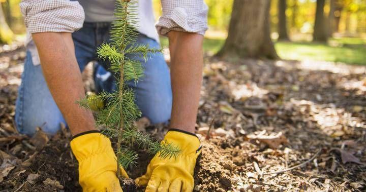 tree planting jobs ontario