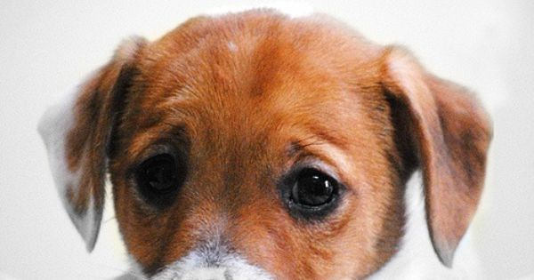 Puppie - lovely photo