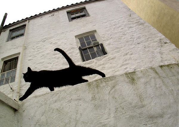 Fabulous black cat stretching silhouette artwork.  Idea forming for the white wall of my staircase...