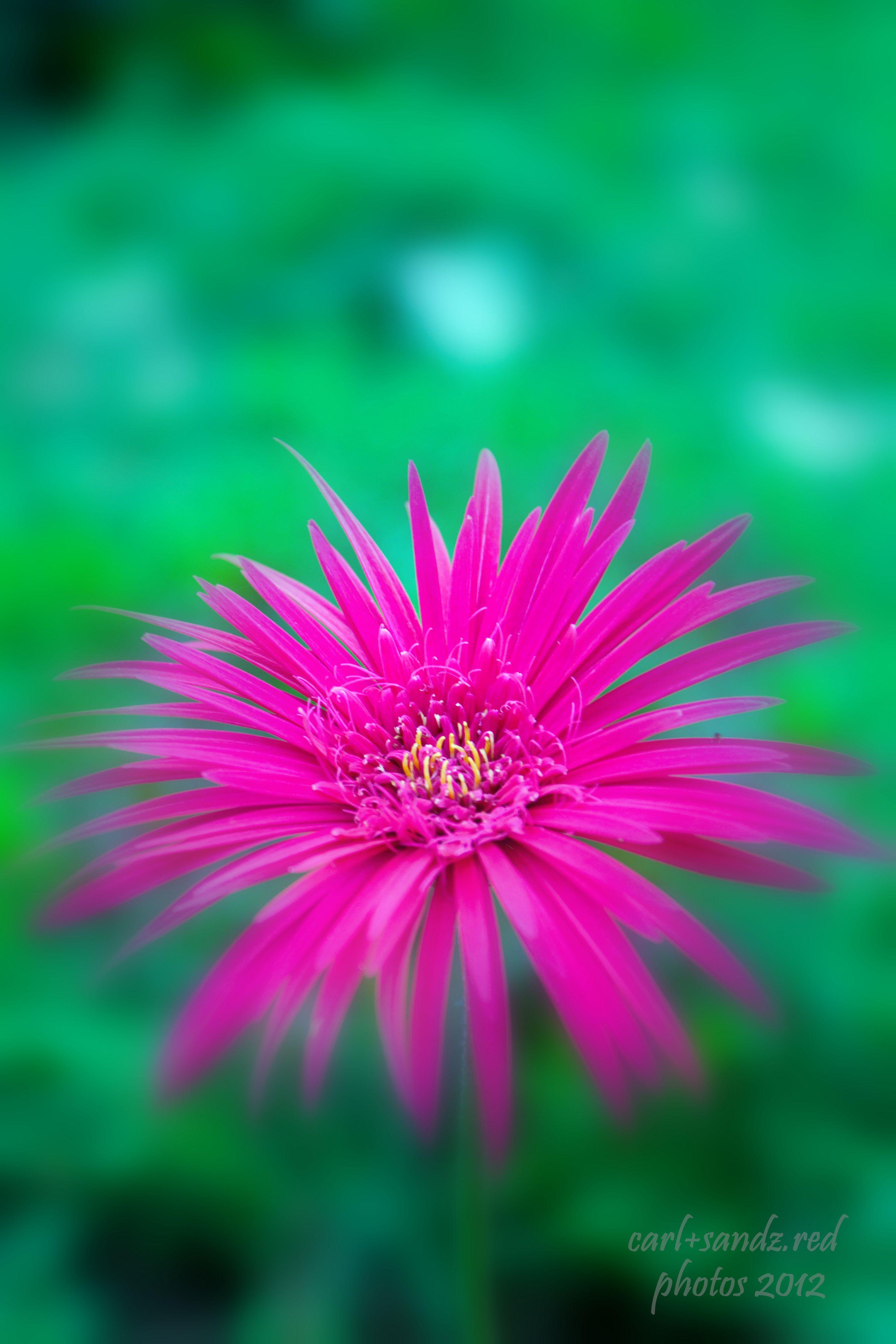 flower seen in Camiguin Island, Philippines.. Beautiful