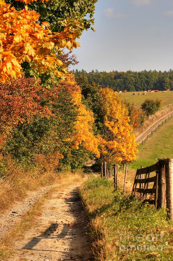 country road and autumn landscape photograph country