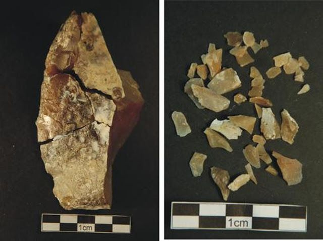 Marcas de corte y de percusión en los huesos de elefante del yacimiento de Preresa (Madrid)