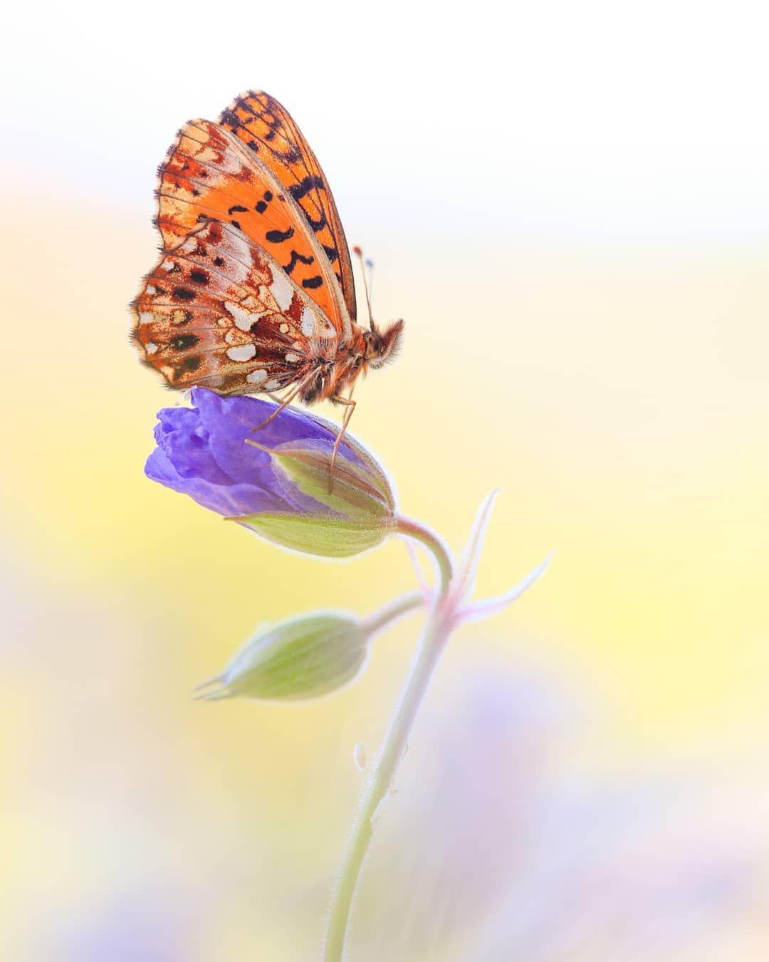 Andreas On Instagram Heute War Der Erste Tag Der Woche Mit Temperaturen Uber 20 C Unglaublich Wieviele Schmetterlinge Auf Einma Photographer Animals Insects