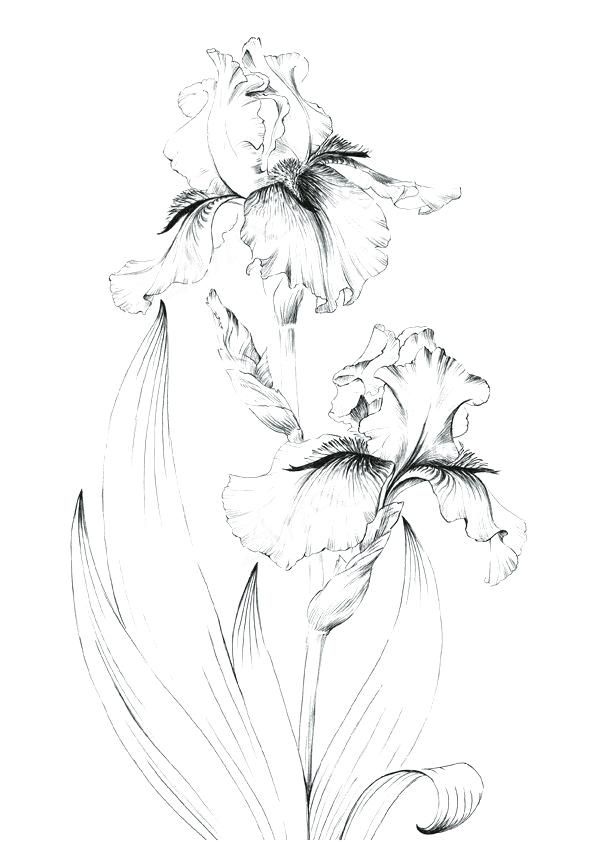 Sensitive Line In 2020 Pencil Drawings Of Flowers Flower Sketches Flower Line Drawings