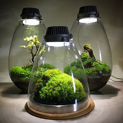 Image result for moss terrarium with lights | Plant lighting, Best led grow lights, Indoor grow ...