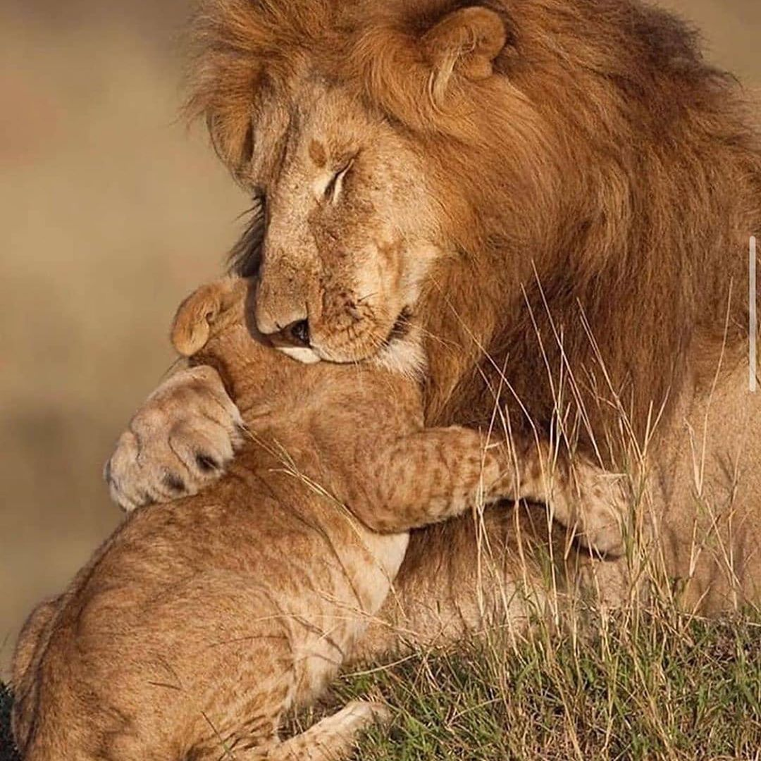 Top 10 Pets | Male lion, Animals beautiful, Lion