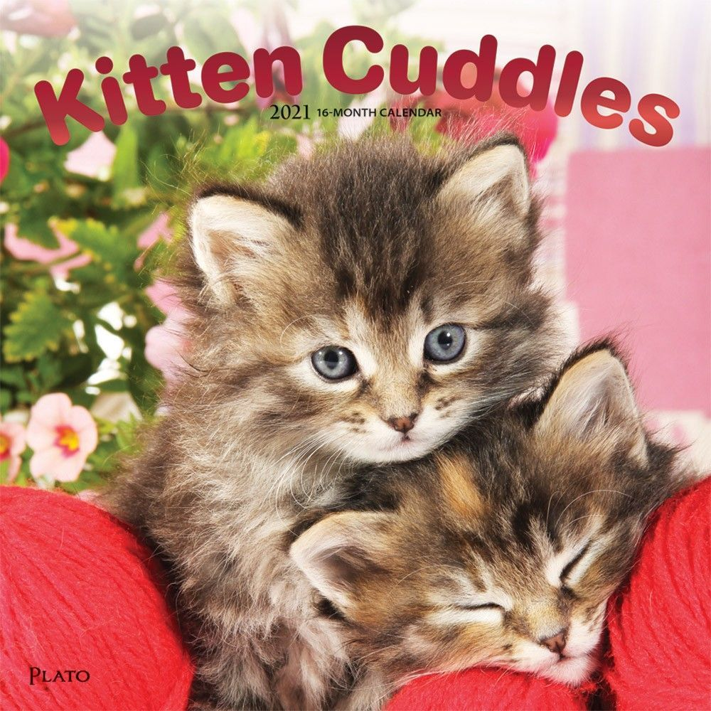 Kittens Cuddles Wall Calendar In 2020 Kitten Cuddle Kittens Cutest Kitten